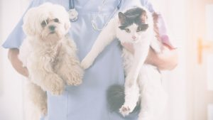 Read more about the article Risky Business – 5 Key Financial Stages for Veterinarians